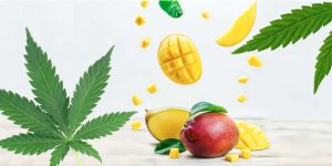 Cannabis with Mangos